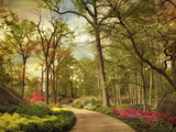 The Azalea Garden Photographic Print by Jessica Jenney