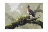 Ornate Hawk - Eagle Giclee Print by Harro Maass