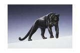Black Panther Giclée-tryk af Harro Maass