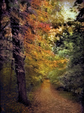 Autumn Trail Photographic Print by Jessica Jenney