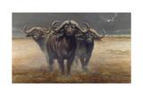 Cape Buffalos Giclee Print by Harro Maass