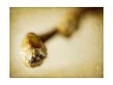 Mulberry 2 Giclée-tryk af Jessica Rogers