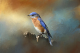 Bluebird on the Fence Reproduction procédé giclée par Jai Johnson