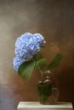 Blue Hydrangea in a Vase Giclee Print by Jai Johnson