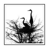 Birds Nesting Giclee Print by Harold Silverman