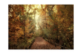 Woodland Light Giclee Print by Jessica Jenney