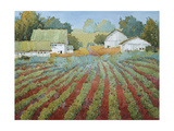 White Barns in Virginia Giclee Print by Joyce Hicks