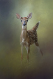 Fawn in the Forest Giclee-trykk av Jai Johnson