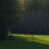 Suède Reproduction photographique par Maciej Duczynski
