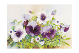 Early Pansies Giclee Print by Joanne Porter
