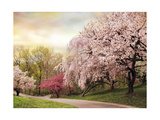 Asian Cherry Grove Giclee Print by Jessica Jenney