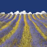 Lavender Heaven Photographic Print by Lars Van de Goor