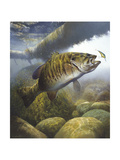 Smallmouth Bass Giclee Print by Larry Tople