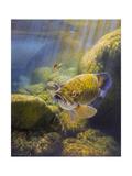 Smallmouth Bass Lámina giclée por Larry Tople