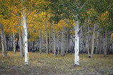 Dixie Forest, UT Photographic Print by J.D. Mcfarlan