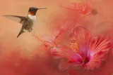 Hummingbird and Peach Hibiscus Giclee Print by Jai Johnson