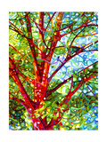 Summer Medley Giclee Print by Mandy Budan
