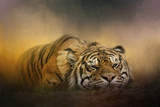 The Tiger Awakens Giclee Print by Jai Johnson
