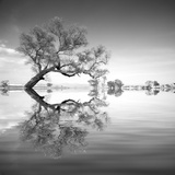 Arbol en Agua 3 BN Reproduction photographique par Moises Levy