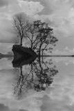 Arboles en Agua 8 BN Reproduction photographique par Moises Levy