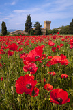 Poppies Close and Personal Reproduction photographique par Michael Blanchette
