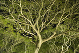 Costa Rica Tree Color 2 Photographic Print by Moises Levy