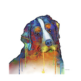 Bernese Mountain Dog Giclee Print by Marlene Watson