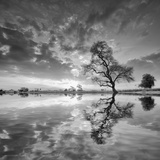 Arbol en Agua 5 BN Photographic Print by Moises Levy