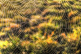 Morning Web Photographic Print by Robert Goldwitz