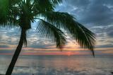 Key West Sunrise One Palm Photographic Print by Robert Goldwitz