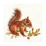 Red Squirrel Giclee Print by Peggy Harris