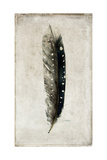 Feather 2 Giclee Print by  Symposium Design
