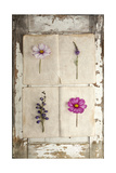 Botanical Board 4 Giclee Print by  Symposium Design