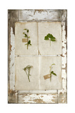 Botanical Board 3 Giclee Print by  Symposium Design