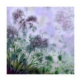 Lavender Day Giclee Print by Mindy Sommers