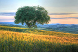 Tuscan Tree Pink Sunset Photographic Print by Robert Goldwitz
