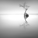 Zen Tree Photographic Print by Moises Levy