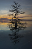 El árbol Lámina fotográfica por Moises Levy