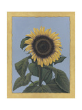 Apple Sunflower Giclee Print by Michele Meissner