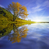 Yellow Tree Reflection Photographic Print by Moises Levy