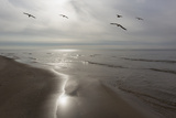 Five Birds, Grand Haven, Michigan '14 - Color Photographic Print by Monte Nagler