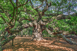 Angel Oak Photographic Print by Robert Goldwitz