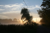Willows Morning Road Photographic Print by Robert Goldwitz
