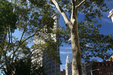 Flatiron Building with Trees Photographic Print by Robert Goldwitz