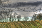 Autumn Grey Sky and Geese Photographic Print by Robert Goldwitz
