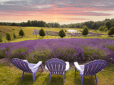 Lavender Chairs, Horton Bay, Michigan '14 Photographic Print by Monte Nagler