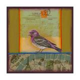 Purple Finch Giclee Print by Rachel Paxton