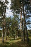 Pine Path Vertical Photographic Print by Robert Goldwitz