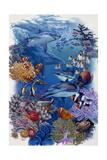 Reef Giclee Print by Tim Knepp