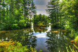 Pond and Pines Photographic Print by Robert Goldwitz